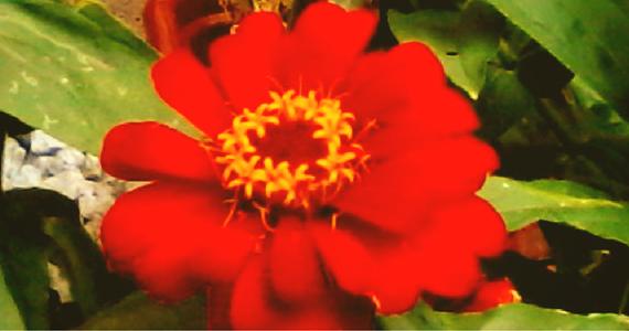 Świetlica Marysieńka - kwiaty